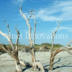 Dead Tree Formation | Image 4