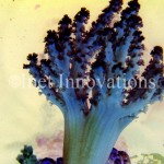Green Nepthea Coral | Image 1