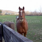 Horse At Hocking College | Image 3
