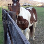 Horse At Hocking College | Image 4