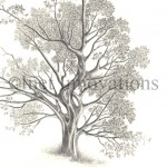 Detailed Tree Sketch