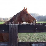 Horse At Hocking College | Image 1