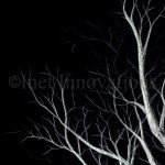 Tree Branches Sketch 1